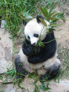 Your Local Business Online and the Google Panda Update