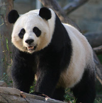 A Google rankings Panda?