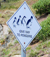 Give way to penguins...