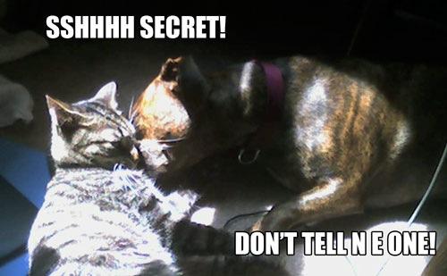 keyword not provided shhhh its a secret