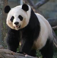 A Google rankings Panda?