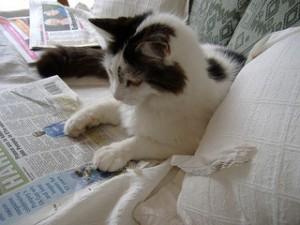 Old news cat